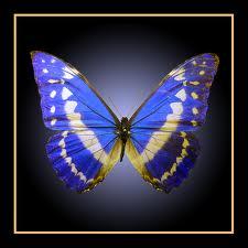 Amazon Rainforest Butterfly