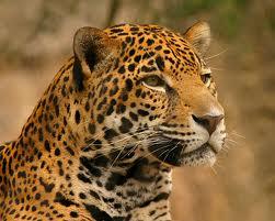 Amazon Travel Dangerous Animals
