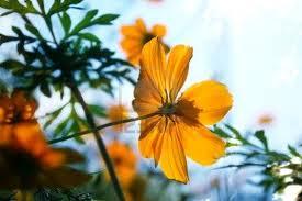 Orange Tropical Brazil Flowers